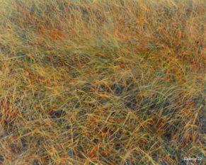 ZAKONJŠEK JONI, DOTIK PRED TEM, 2003, 40 × 50 CM